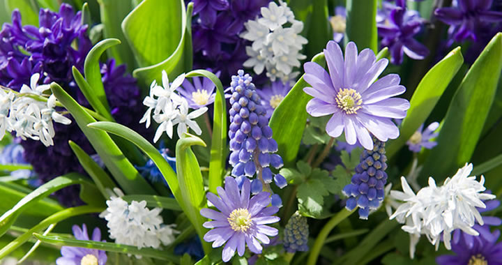 Bollen Bloeiend Voorjaar : Een bloeiend cadeautje voor later u tuincentrum de pas
